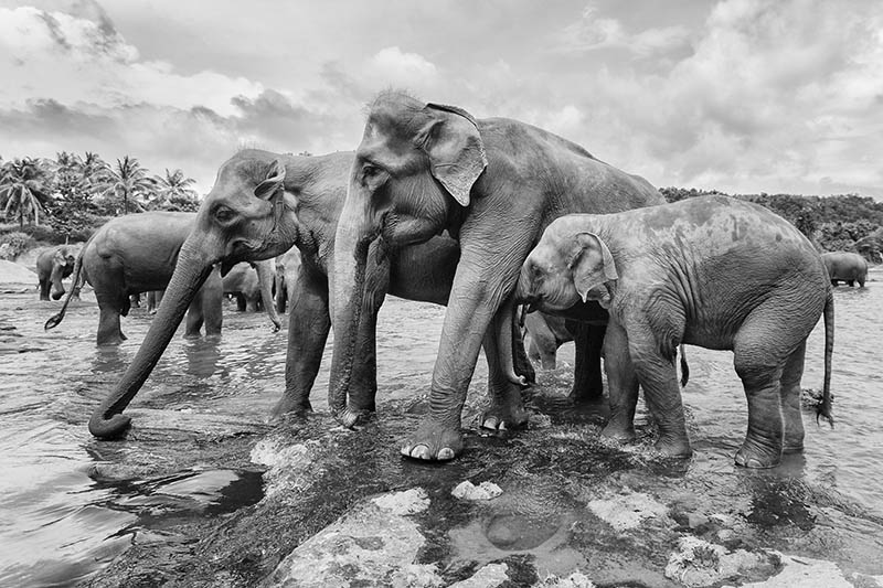 2015-07-10-1436531793-6628219-Elephant4.jpg