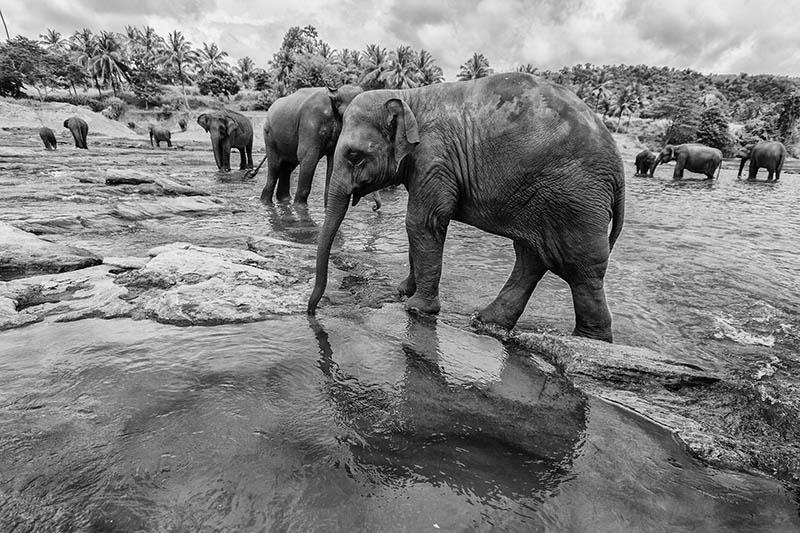 2015-07-10-1436531821-2971788-Elephant5.jpg