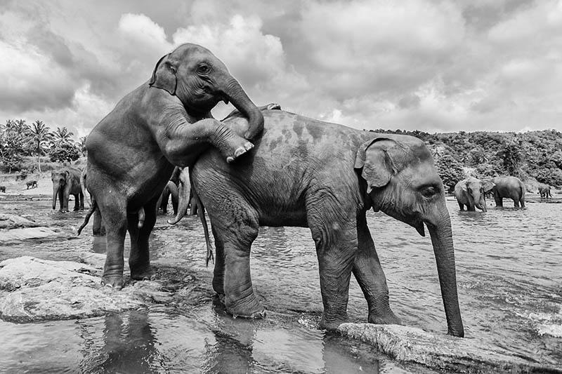 2015-07-10-1436531875-5692194-Elephant7.jpg