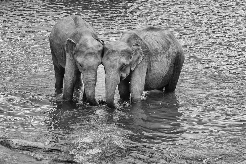 2015-07-10-1436531928-7112079-Elephant9.jpg