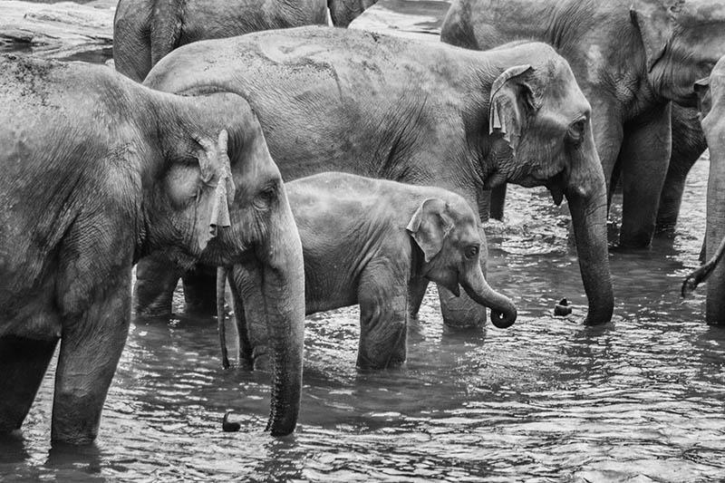 2015-07-10-1436531983-5341768-Elephant10.jpg