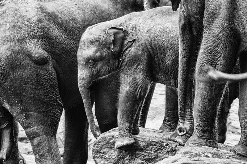 2015-07-10-1436532010-1459895-Elephant11.jpg