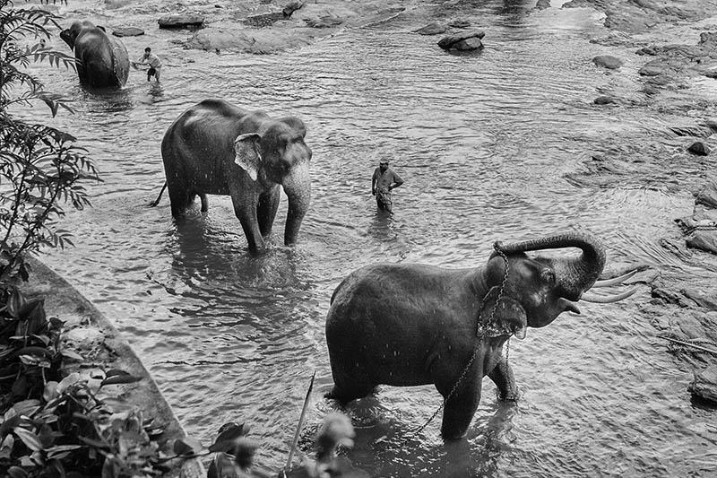 2015-07-10-1436532037-2949470-Elephant12.jpg