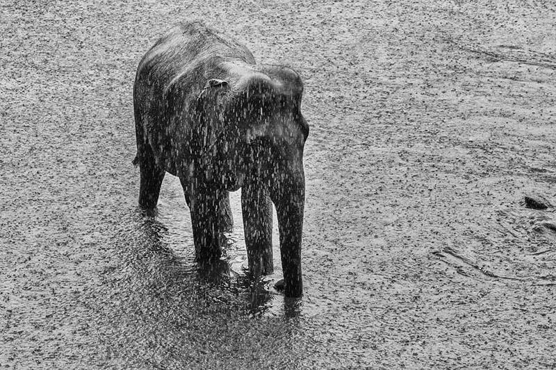 2015-07-10-1436532100-9491691-Elephant14.jpg