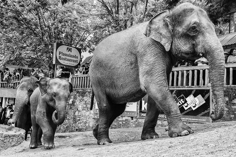 2015-07-10-1436532126-2820917-Elephant15.jpg