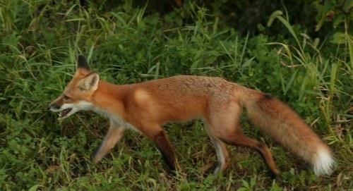 2015-07-13-1436811775-6734959-fox.jpg
