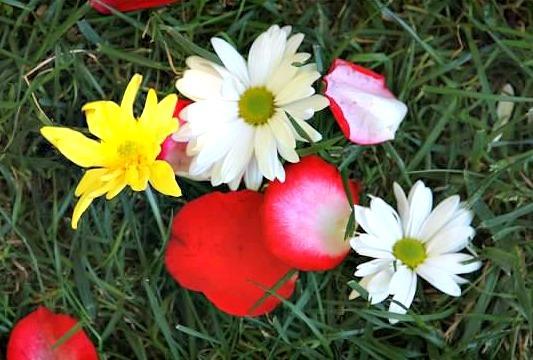 2015-07-14-1436848392-6647165-springflowers.jpg