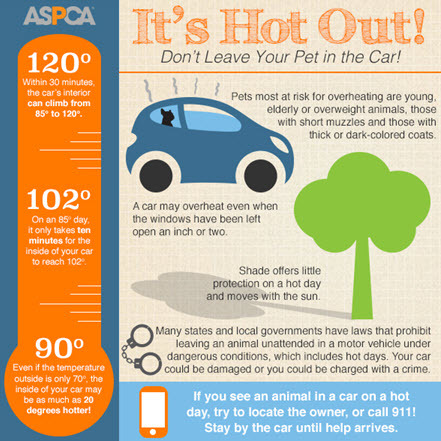 2015-07-15-1436933903-6501912-infographic_hotcar.jpg
