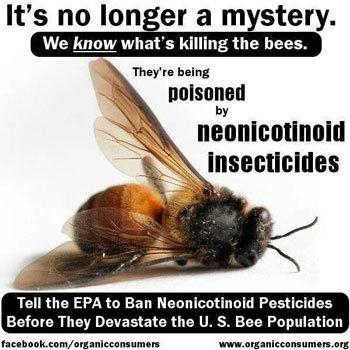 2015-07-15-1436982735-6127180-gmocorntreatedwithneonicotinoidspesticidesmanufacturedbyBayerSyngentakillbees.jpg