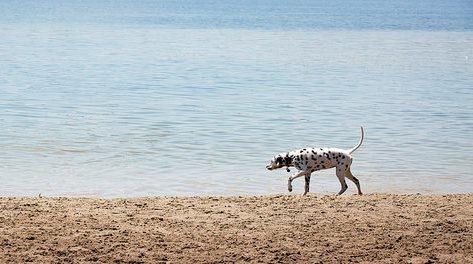 2015-07-16-1437073664-4947276-Doggy4.jpg