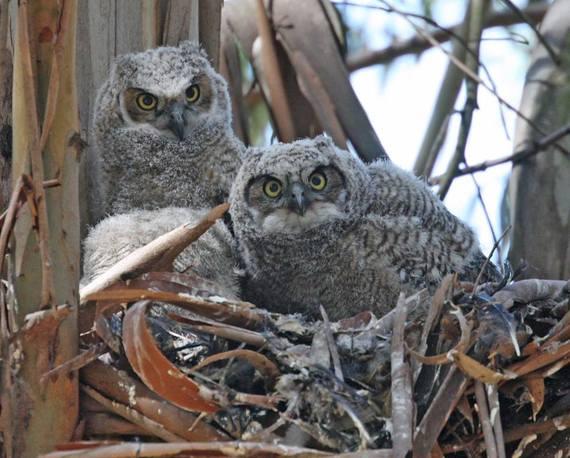 2015-07-19-1437327468-2559432-owl.jpg