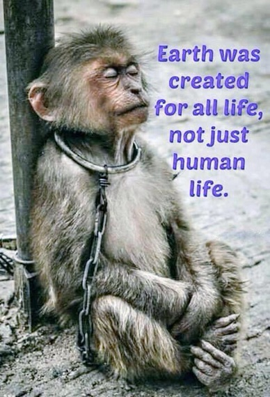 2015-07-20-1437384433-5786852-Monkeyoriginallypublishedindiansnews.com.jpg