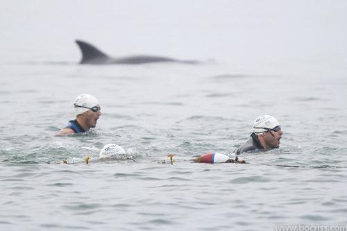2015-07-21-1437453397-4035704-Dolphin.jpg