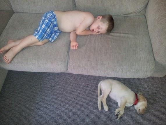2015-07-28-1438082176-9371682-sleepingdogs.jpg