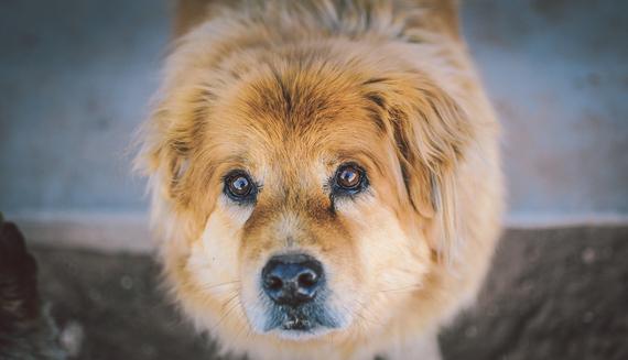 2015-07-30-1438247058-9167642-animaldogpetcute1.jpg