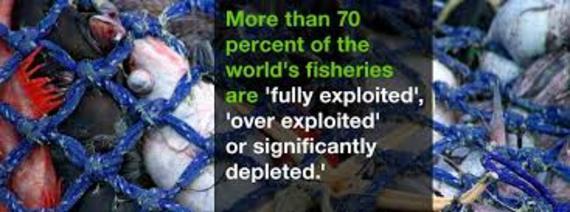 2015-08-02-1438535332-3131661-overfishing.jpg
