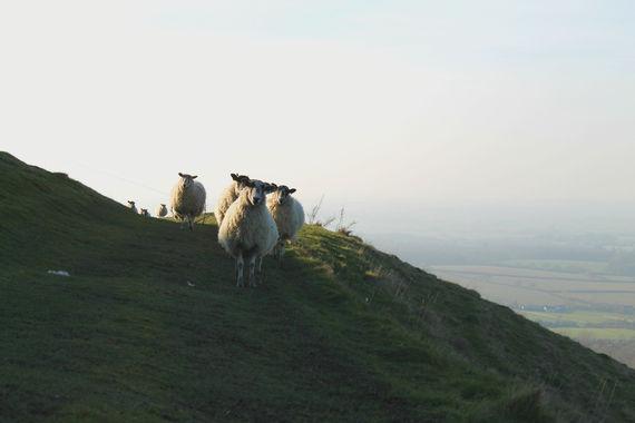 2015-08-03-1438630545-8954622-sheep.jpg
