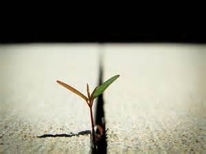 2015-08-05-1438802019-3910969-resilience.jpg