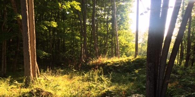 2015-08-05-1438808991-82829-forest.jpg