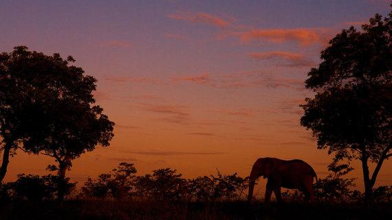 2015-08-07-1438933070-2923358-Elephants4.jpg