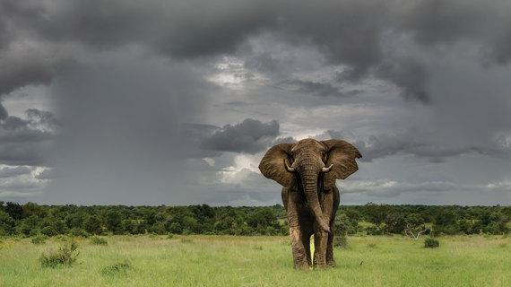 2015-08-07-1438933243-3105255-Elephant21.jpg