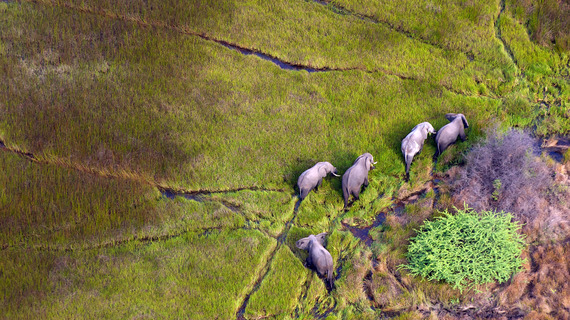 2015-08-07-1438933586-6624214-elephantsdreamstime_m_18029109.jpg