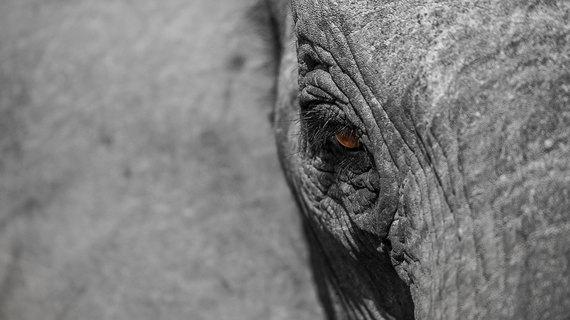 2015-08-07-1438933647-654304-Elephant22.jpg