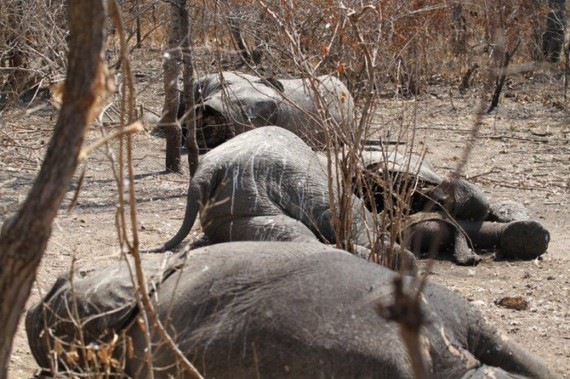 2015-08-07-1438975470-417677-elephantsTanzaniabyPaulLavender700x466.jpg
