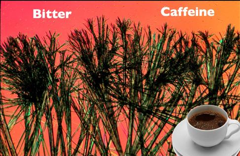 2015-08-10-1439174617-1615214-72500bitter.caffeine016_edited1.jpg