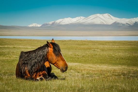 2015-08-10-1439216153-1649983-HorseatSongKullakeKyrgyzstan.jpg