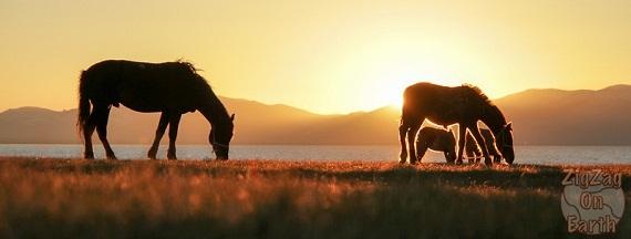 2015-08-10-1439216199-153635-HorsessunsetsongkullakeKyrgyzstan.jpg