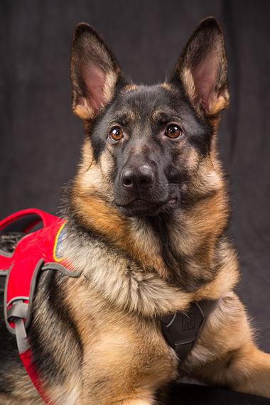 Dog Training Dm Technology