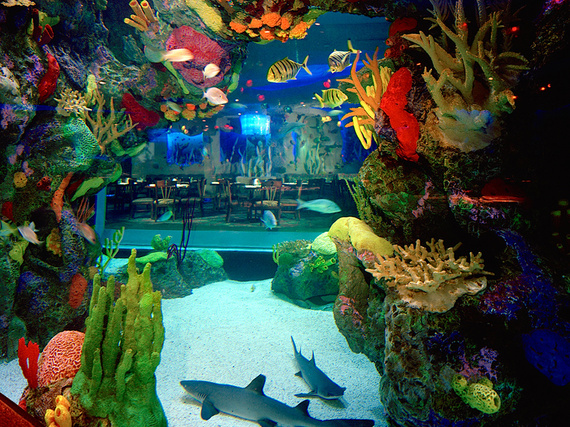 5 Underwater Restaurants And Bars Around The World Huffpost