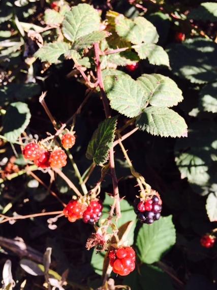 2015-08-14-1439582633-3512314-berries2.jpg