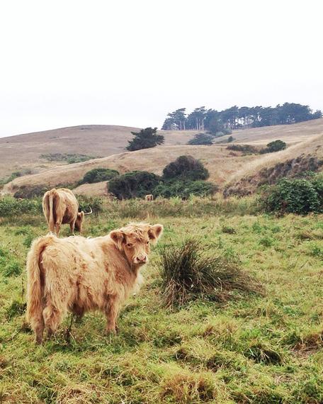2015-08-17-1439841479-163586-spot_road_trip_cows.jpg