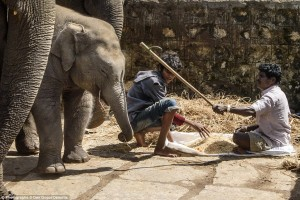 2015-08-20-1440045595-1983381-elephants.jpg