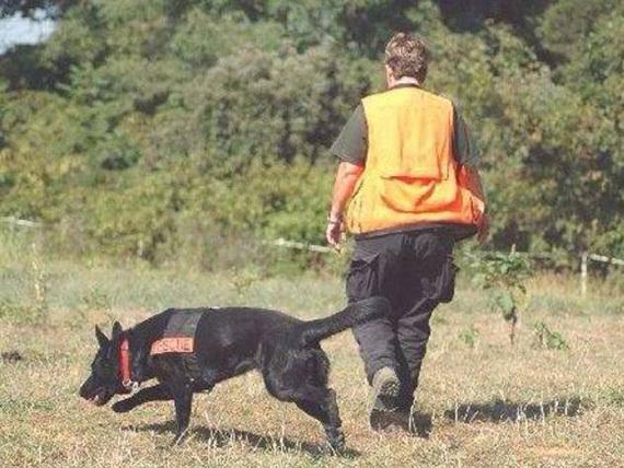 2015-08-24-1440431472-3004927-doghunt570.jpg
