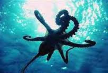 2015-08-25-1440460985-8000202-octopus.jpg