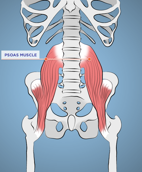 2015-08-26-1440595347-6499342-psoasMuscle1.png