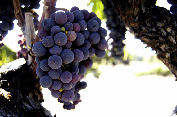 2015-08-26-1440601225-7782380-cawinegrapes.jpg