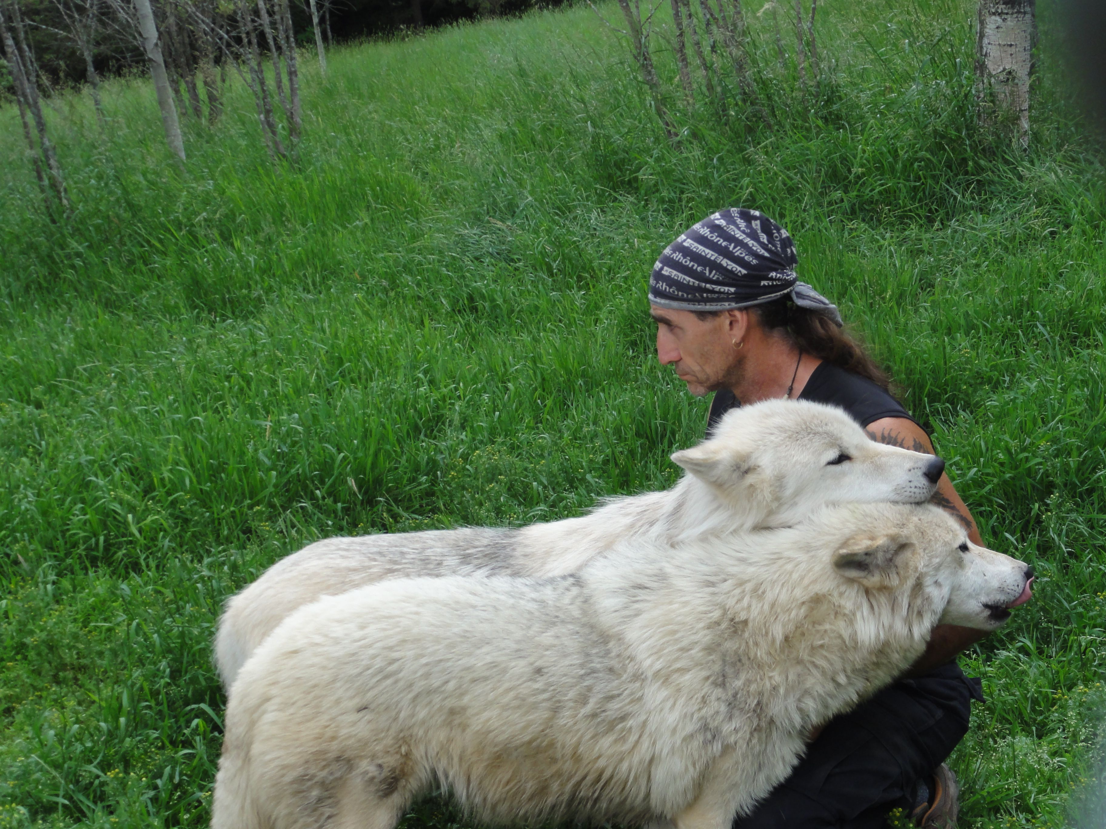 Sleeping With Wolves and Camping in a Boreal Forest ...