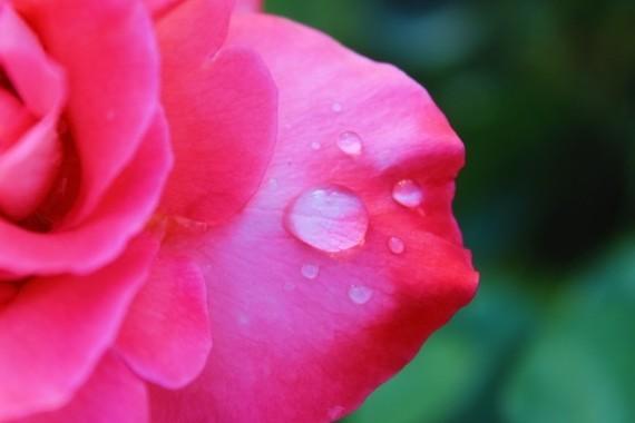 2015-09-04-1441386034-40015-rosepinkwetdetails.jpg