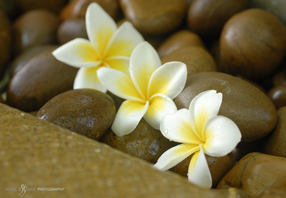 Spa details from the tropical island of Koh Samui © Michelle Chaplow