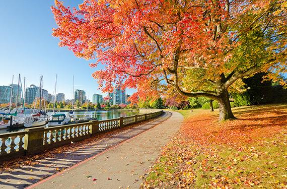 2015-09-06-1441518139-5922304-VancouverTreesGL.jpg