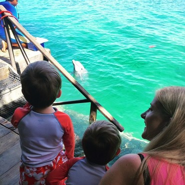 2015-09-10-1441916017-3959800-dolphincove.jpg