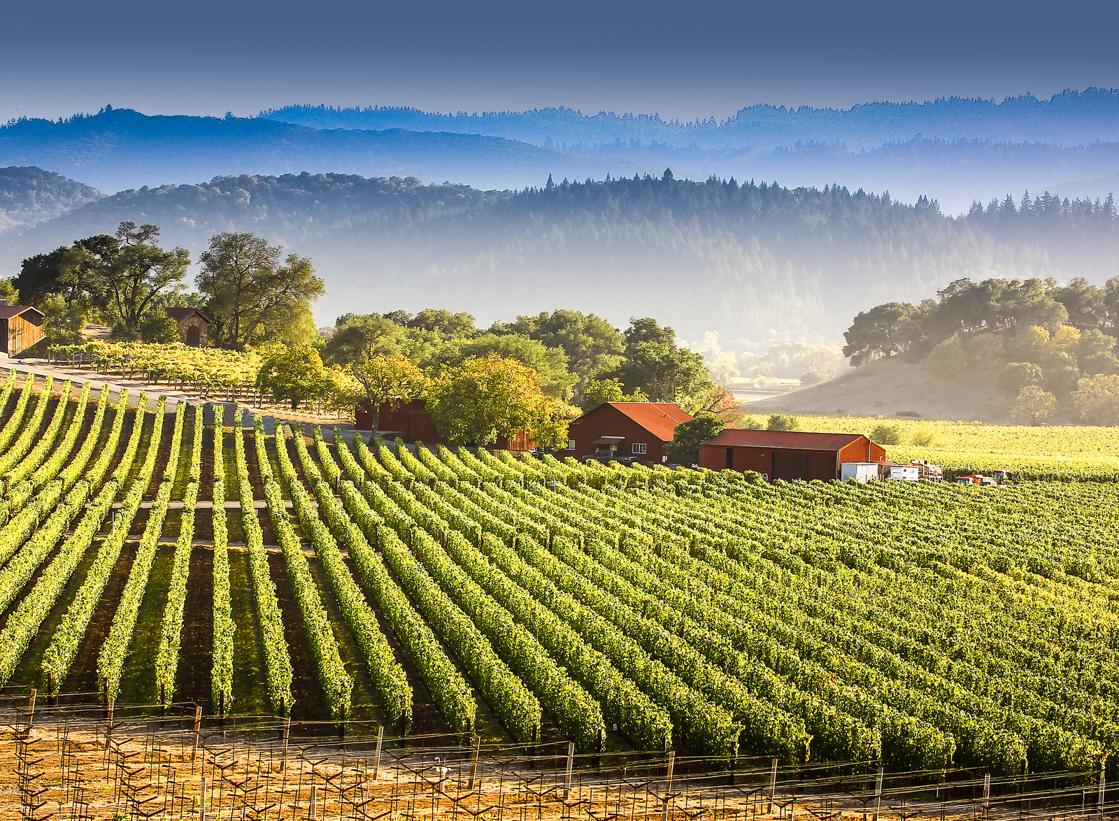 5 Unexpected Finds In Napa Valley
