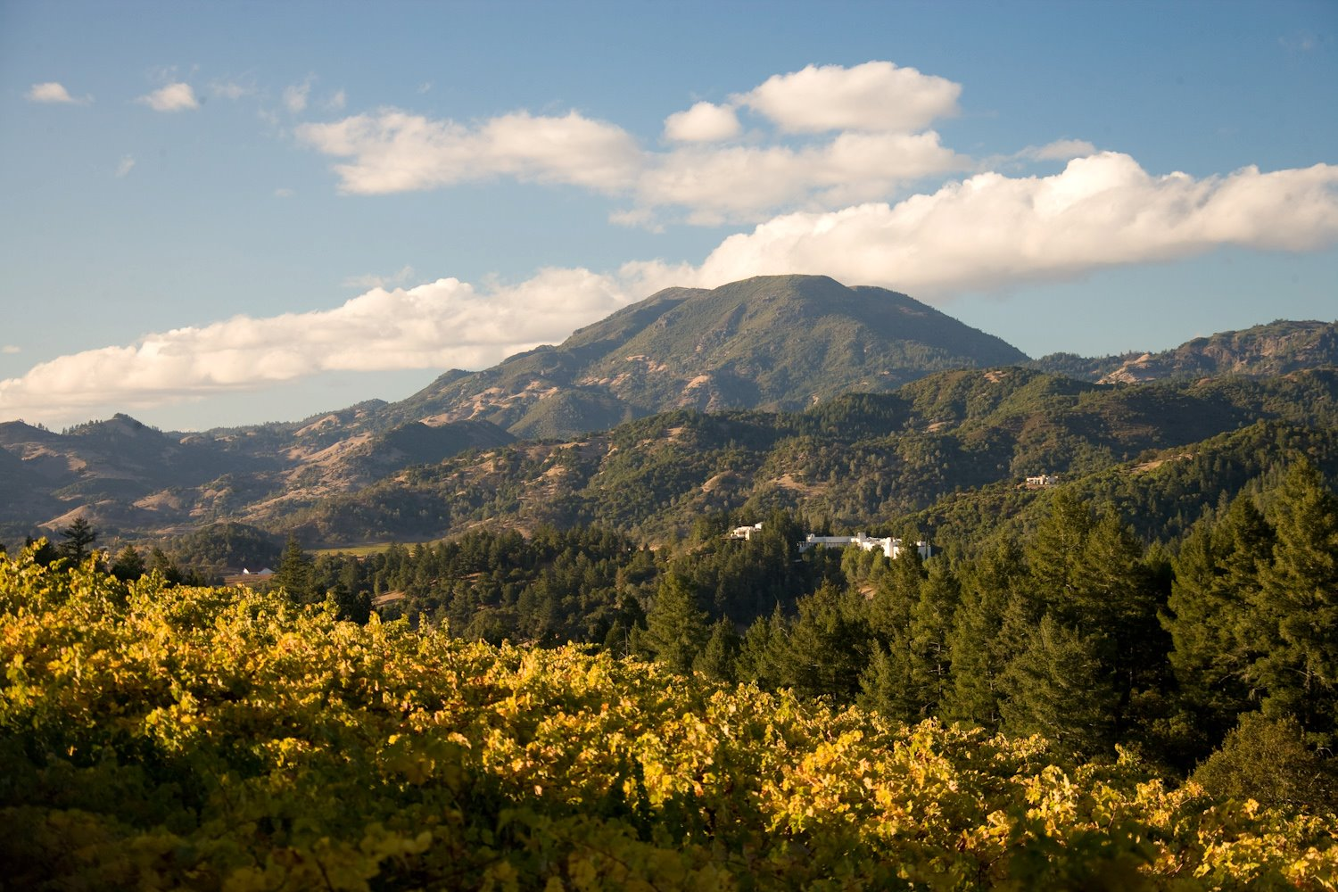 5 Unexpected Finds In Napa Valley Huffpost
