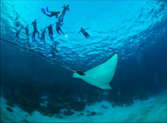 2015-09-23-1443005297-3027767-Diving.jpg