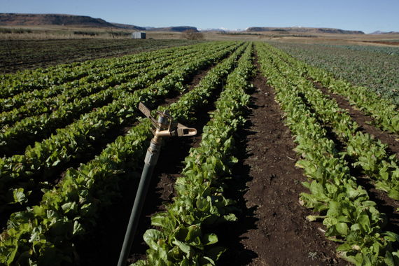 2015-09-23-1443019878-545232-Irrigation.irrigationinLesotho.Credit_JohnHoggWorldBank.jpg