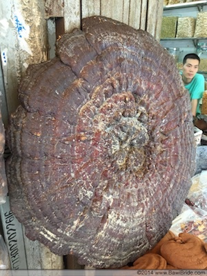 2015-09-24-1443063046-416715-GiganticMushroom_Guangzhou.jpg